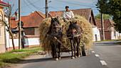 Farmer transporting hay using horse and cart, typical village life near Sighisoara, Transylvania, Romania, Europe