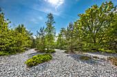Flintstone field, Neu Mukran, Ruegen Island, Mecklenburg-Western Pomerania, Germany