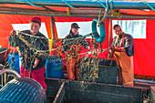 Fishermen with net, Gager, Moenchgut, Ruegen Island, Mecklenburg-Western Pomerania, Germany