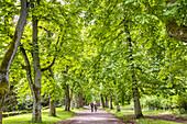 Schlosspark, Puttbus, Rügen, Mecklenburg-Vorpommern, Deutschland
