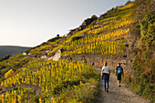 Ahr sinuosity, near Mayschoss, Ahrsteig hiking trail, Rotweinwanderweg hiking trail, Ahr, Rhineland-Palatinate, Germany
