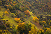 Terrassen an den bewaldeten Hängen des Ahrtals, bei Altenahr, Ahrsteig, Rotweinwanderweg, Ahr, Rheinland-Pfalz, Deutschland