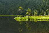 Floating vegetation mat, afloat isle at Kleiner Arbersee, Bavarian Forest, Bavaria, Germany