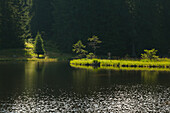Floating vegetation mat, afloat isle at Kleiner Arbersee, Bavarian Forest, Bavaria, Germany