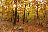 Nature reserve Teufelsley, biggest connected quarzite block in Europe, near Hoenningen, Eifel, Rhineland-Palatinate, Germany