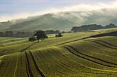 Morning mist over the fields, near Niederzissen, Eifel, Rhineland-Palatinate, Germany