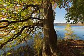 Laacher See, near Maria Laach, Eifel, Rhineland-Palatinate, Germany