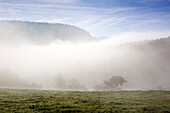 Morning mist, near Lind, Eifel, Rhineland-Palatinate, Germany