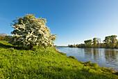 Birtener Altrhein, old arm of the Rhine river, near Xanten, Lower Rhine, North-Rhine Westphalia, Germany
