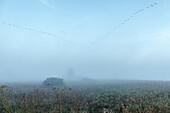 Vogelformation im Morgengrauen, Teichlandschaft im Herbst, Herbstnebel, Bodenfrost, Graugänse, V-Formation, Vogelzug, Kanadagänse Zugvögel, Winterquartier, Linum, Linumer Bruch, Brandenburg, Deutschland