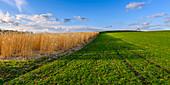 Fields and grassland near Andechs, Bavaria, Germany