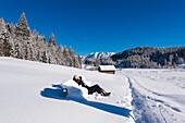 Pause nach einem Schneespaziergang im  frischen Neuschnee bei Gerold, Bayern, Deutschland