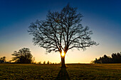 close to dawn at a barren tree in Bavaria, Germany
