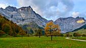 Ahorn vor der Bergkulisse des Karwendel, großer Ahornboden, Tirol, Österreich