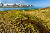 Leuchtend grünes Moos an den Ostfjorden, Island
