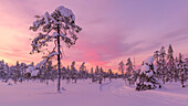 pink sunset above the ski tracks of Luosto, Pyhä-Luosto National park, finnish Lapland