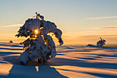 long shadows and warm light on the snow-covered hills of Luosto, finnish Lapland