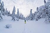 Schneeschuhwanderung durch die tief verschneiten Bäume des Pyhä-Luosto Nationalparks, finnisch Lappland