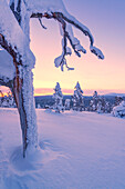 pristine snowscapes covered in pastel-colored light on the hills of Luosto, finnish Lapland