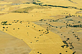 aerial shot of individual trees in the dried-out fields south-east of Madrid, Spain