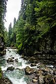 River landscape, dry riverbed with vegetation, bog, Bavaria, Oberallgäu, Oberstdorf, Alps, Germany