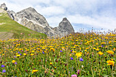Alpine flower meadow, summer flowers, summer meadow, hiking holiday, nature, Mountain tour, Alpine meadow, break, hiking trails, Allgäu, Alps, Bavaria, Oberstdorf, Germany