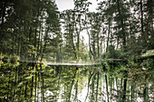Spreewald Biosphere Reserve, Germany, Hiking, Kayaking, Recreation Area, Family Vacation, Family Outing, Paddling, Rowing, Wilderness, Excursion, Day Trip, River Landscape, Beech Grove, Water Reflection, Early Morning, Water Surface