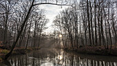 Spreewald Biosphere Reserve, Brandenburg, Germany, Kayaking, Recreation Area, Wilderness, River Landscape and beech grove at dawn, Deciduous Forest, Deciduous Trees, Winter Landscape, Spree