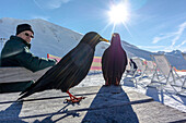 Germany, Bavaria, Alps, Oberallgaeu, Oberstdorf, Nebelhorn, Winter Landscape, Winter Sports, Jackdaw, Alpine Chough in the snow