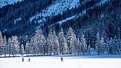 Austria, Ifen, Schwarzwassertal, winter landscape, winter holidays, winter sports, cross-country skiing, cross-country skis, winter hiking trail, cross-country ski run, snow, mountains