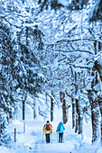 Germany, Bavaria, Alps, Oberallgaeu, Oberstdorf, Oytal, winter landscape, winter holidays, avenue of trees in Winter, people hiking, hiker, winter hiking trail