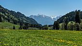 Germany, Bavaria, Alps, Oberallgaeu, Oberstdorf, Summer landscape, Summer holidays, Mountain panorama and flower meadow, Biodiversity