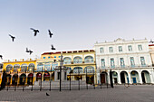 birds on Plaza Vieja in the early morning, doves, historic town, center, old town, Habana Vieja,  family travel to Cuba, holiday, time-out, adventure, Havana, Cuba, Caribbean island