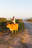 cattle herder with cow, bringing fresh milk, access road to Cayo Jutias, loneliness, family travel to Cuba, parental leave, holiday, time-out, adventure, Cayo Jutias, near Santa Lucia and Vinales, Pinar del Rio, Cuba, Caribbean island