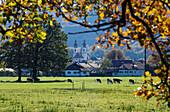 Pfarrkirche mit Feld, Aschau an den Chiemgauer Voralpen, Bayern, Deutschland