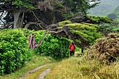 Frau wandert auf Abel Tasman Coastal Track durch Wald mit Windflüchtern, Abel Tasman Coastal Track, Great Walks, Abel Tasman Nationalpark, Tasman, Südinsel, Neuseeland