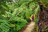 Frau wandert auf Abel Tasman Coastal Track durch Regenwald mit Farnbäumen, Abel Tasman Coastal Track, Great Walks, Abel Tasman Nationalpark, Tasman, Südinsel, Neuseeland