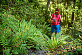 Woman hiking through forest with ferns, at Mount Alfred, Fiordland National Park, UNESCO Welterbe Te Wahipounamu, Queenstown-Lake District, Otago, South island, New Zealand