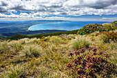 View from Hump Ridge to Tasman Sea, Hump Ridge, Hump Ridge Track, Fiordlands National Park, UNESCO world heritage Te Wahipounamu, Southland, South island, New Zealand