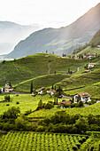 Weinberge und Häuser, Bozen, Provinz Südtirol, Trentino-Südtirol, Italien