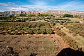 Feld, Felder, la Granja, Guadix, Andalusien, Spanien, Europa