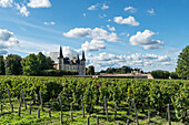 Chateau Pichon Baron , vineyard in Medoc, Margeaux,  grapevine, Bordeaux, Gironde, Aquitaine, France, Europe