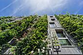 Green Hotel Vauban, Solarsiedlung,  Freiburg, Baden-Wuerttemberg, Schwarzwald, black forest, Germany