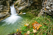 Autumn leaves with waterfall in background, Kuhflucht waterfall, Farchant, Ester Mountains, Bavarian Alps, Upper Bavaria, Bavaria, Germany