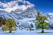 Herbstlich verfärbte Ahornbäume auf verschneitem Großen Ahornboden mit Spritzkarspitze, Großer Ahornboden, Eng, Karwendel, Naturpark Karwendel, Tirol, Österreich