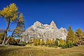 Herbstlich verfärbte Lärchen mit Monte Pelmo, Monte Pelmo, Dolomiten, UNESCO Welterbe Dolomiten, Venetien, Italien