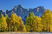 Herbstlich verfärbte Lärchen vor Sorapiss-Gruppe, Monte Pelmo, Dolomiten, UNESCO Welterbe Dolomiten, Venetien, Italien