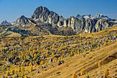 Almwiesen mit herbstlich verfärbten Lärchen vor Setsass und Geislergruppe, Dolomiten, UNESCO Welterbe Dolomiten, Venetien, Italien