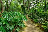 Track leading through palm trees and abundant tropical garden, Botanical Gardens Singapore, UNESCO World Heritage Site Singapore Botanical Gardens, Singapore