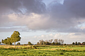 Rain clouds over pasture in evening light, Gödens, Sande, Friesland District, Lower Saxony, Germany, Europe